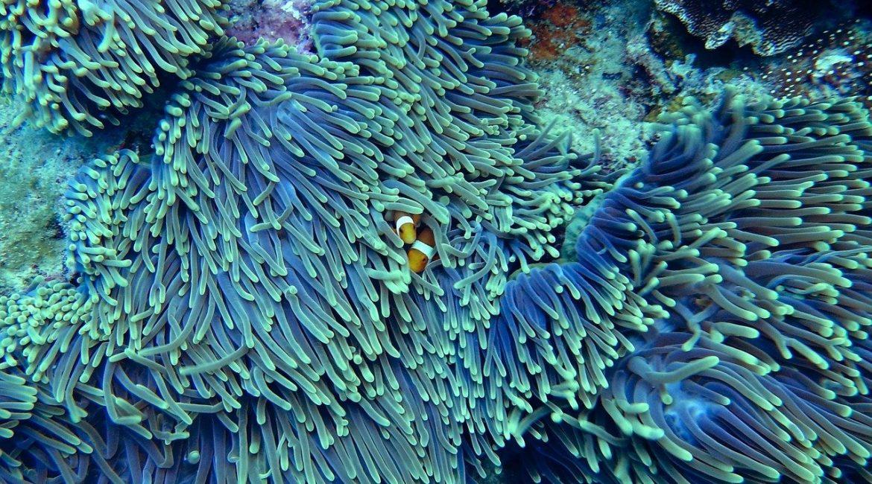 Bicocca e Maldive biodiversità marina